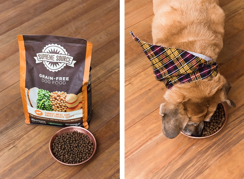 mixed breed eating Supreme Source Grain Free Dog Food, Alice G Patterson Photography, Central New York commercial photographer