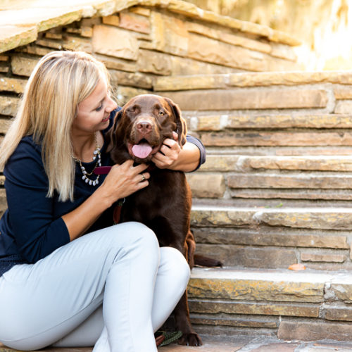 Happy Tails:  Emiline the Chocolate Labrador Retriever