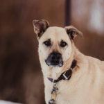 Happy Tails:  Rocket and Rosie | Arvada, Colorado
