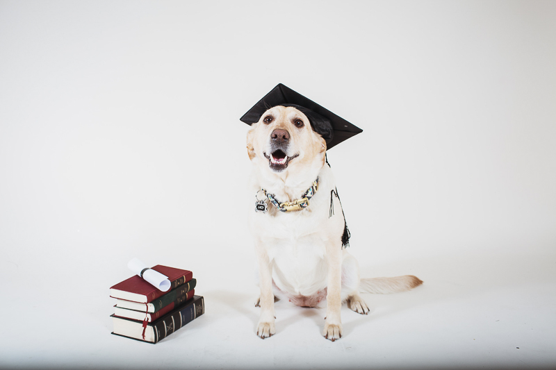 studio pet photography-graduation ideas ©Christina W Kroeker Creative