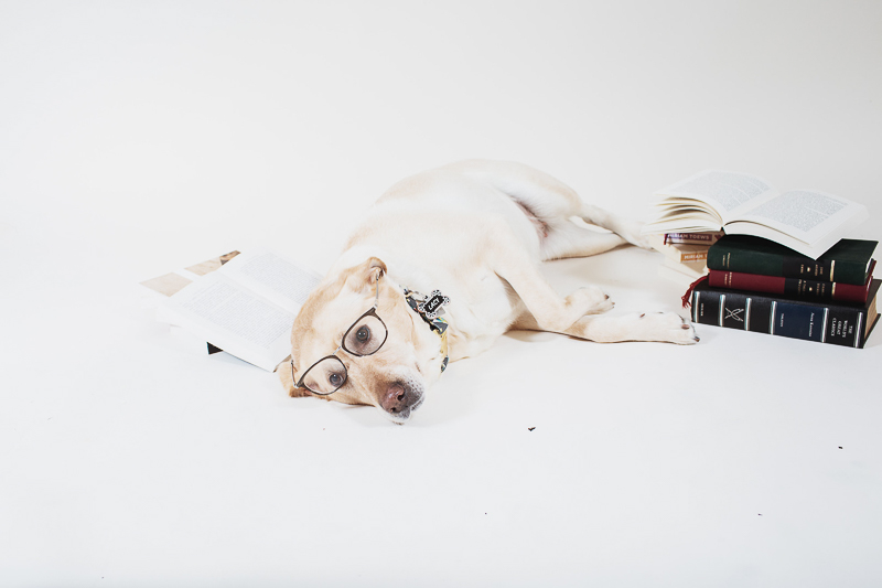 tired dog, dog wearing glasses, studio pet photography ideas, ©Christina W Kroeker Creative