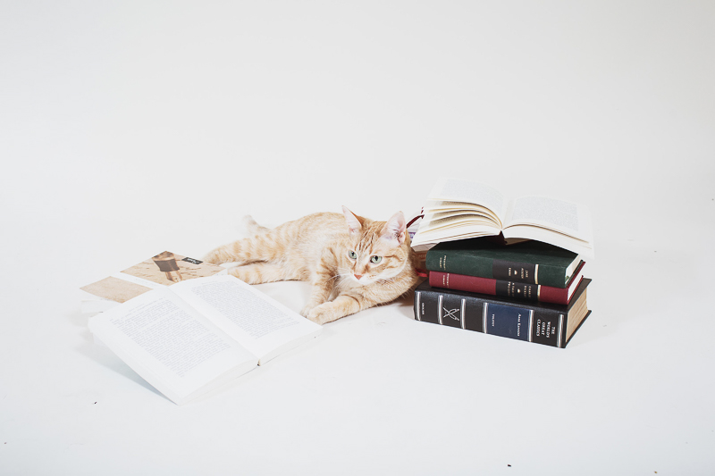 tabby cat and books, creative pet photography ideas | ©Christina W Kroeker Creative