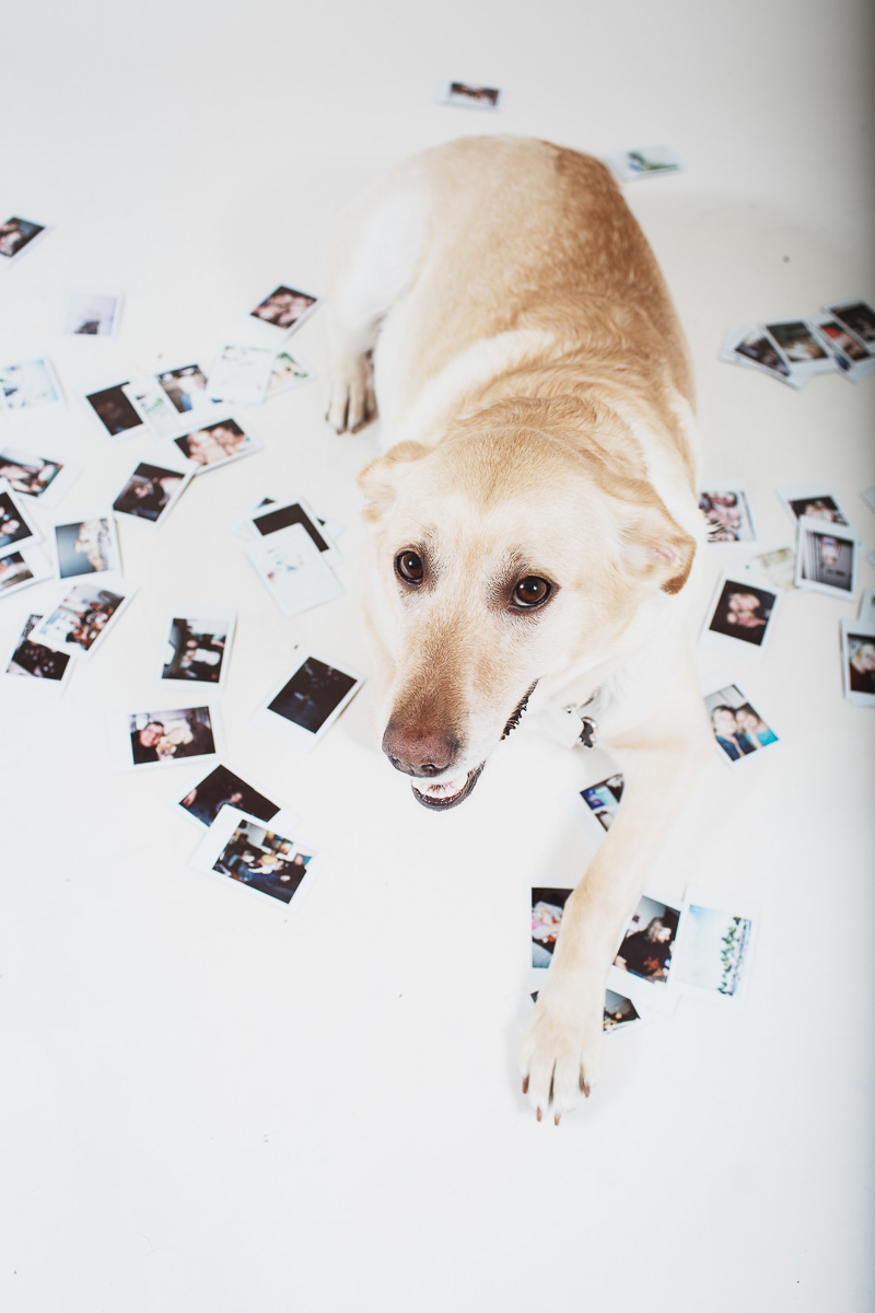 dog lying among photos, ©Christina W Kroeker Creative, custom calendar ideas