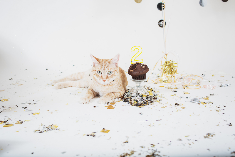 birthday party for cat, studio pet portraits ©Christina W Kroeker Creative, Winnipeg, calendar ideas