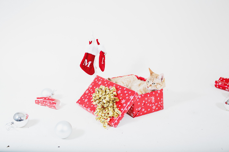 cute cat photography ideas, holiday studio pet photography | ©Christina W Kroeker Creative
