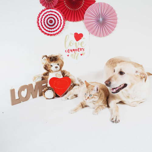 studio pet photography-Valentine's Day