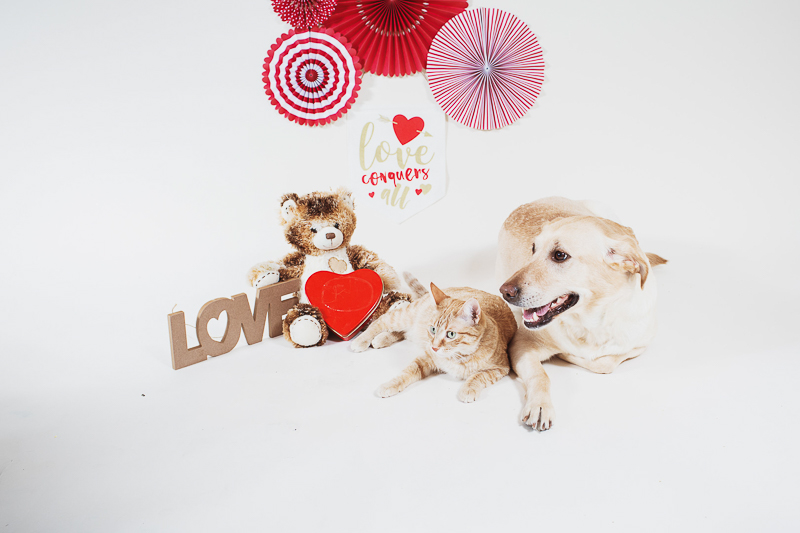 studio pet photography-Valentine's Day | ©Christina W Kroeker Creative, Winnipeg, Manitoba