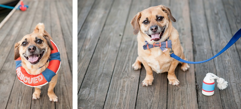 adorable rescue dog on boat dock, Lock 24 © Alice G Patterson Photography | lifestyle dog photography, Syracuse