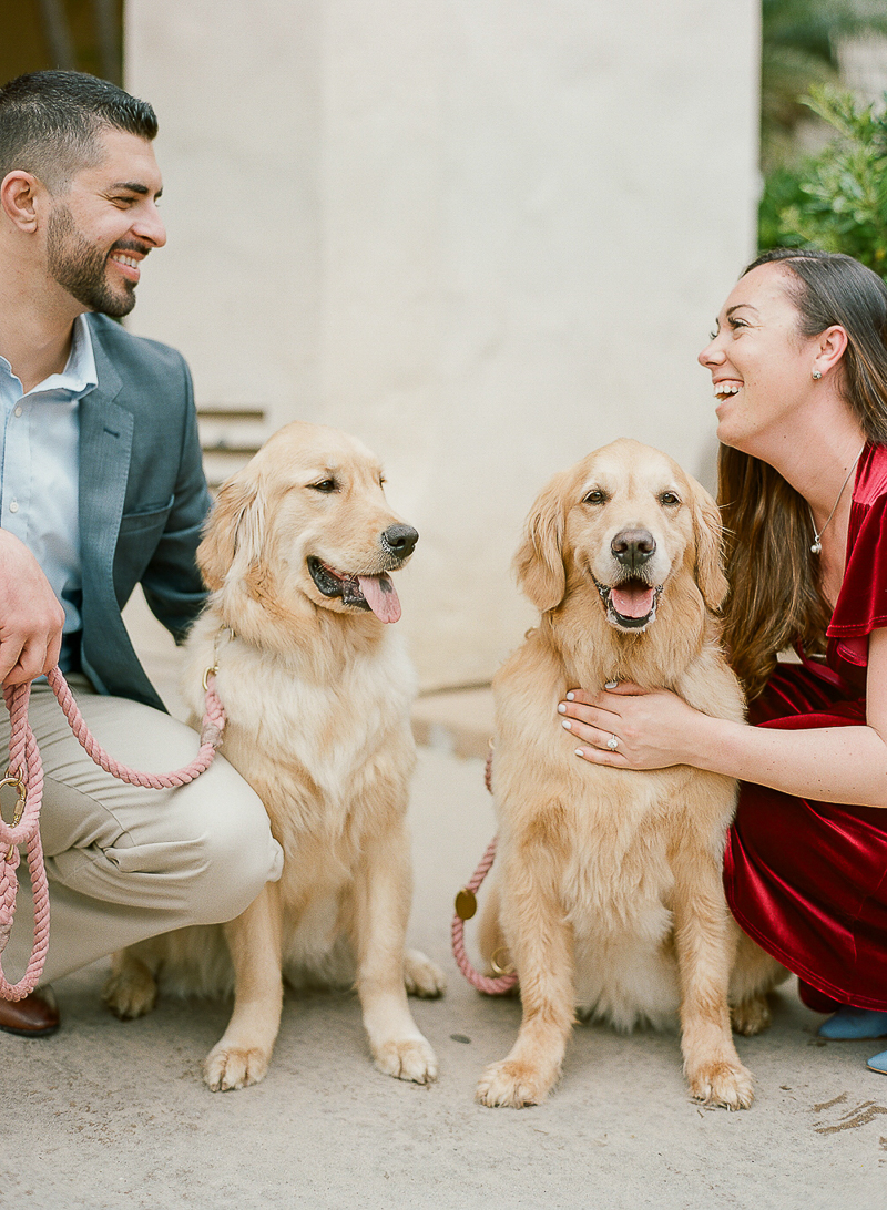 engagement session with Golden Retrievers, ©The Ganeys