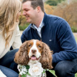 Engaging Tails:  Pippa the Springer Spaniel   Chicago