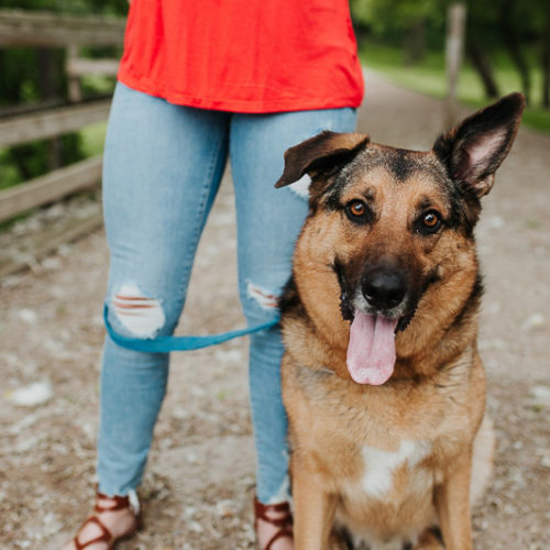Happy Tails:  Apollo the German Shepherd/Catahoula Mix