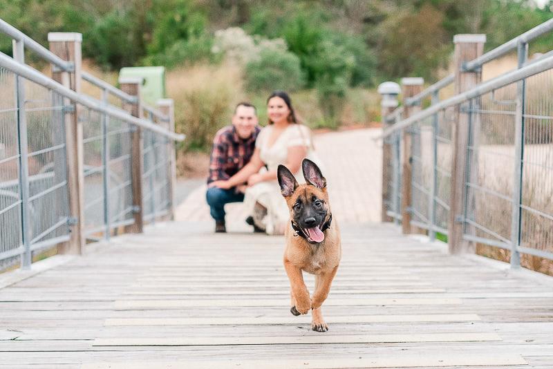 Belgian Malinois Shepherd puppy | Catherine Crane Photography, Virginia Beach pet photographer