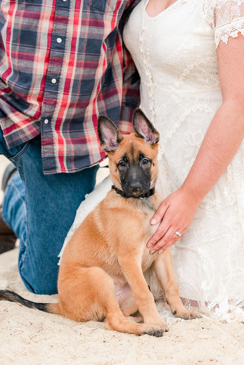 family portraits with a Belgian Malinois | ©Catherine Crane Photography, Virginia Beach Pet Photography