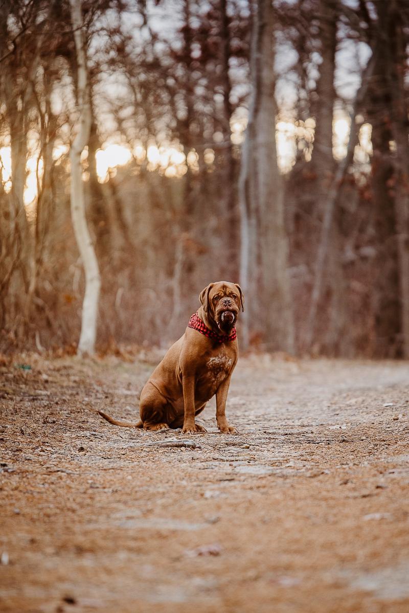 ©Erin Cynthia Photography | lifestyle dog photography, Cheesequake State Park, NJ, winter dog portraits