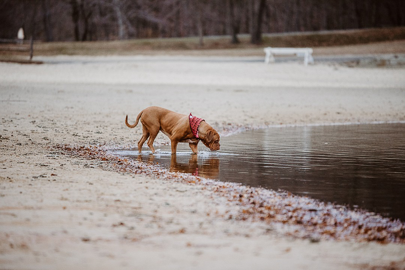 dog entering lake ©Erin Cynthia Photography - Lifestyle dog photography