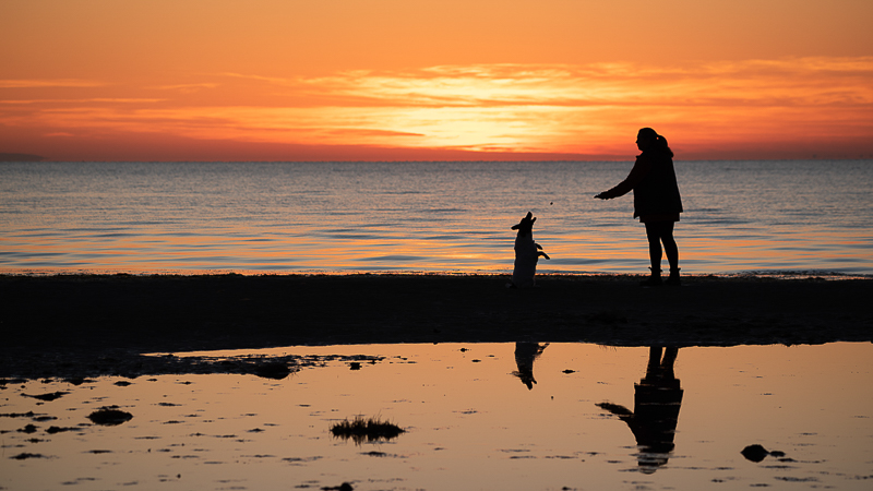 sunrise pet photography, woman and her dog, love between dogs and people, ©Steven Penman Photography