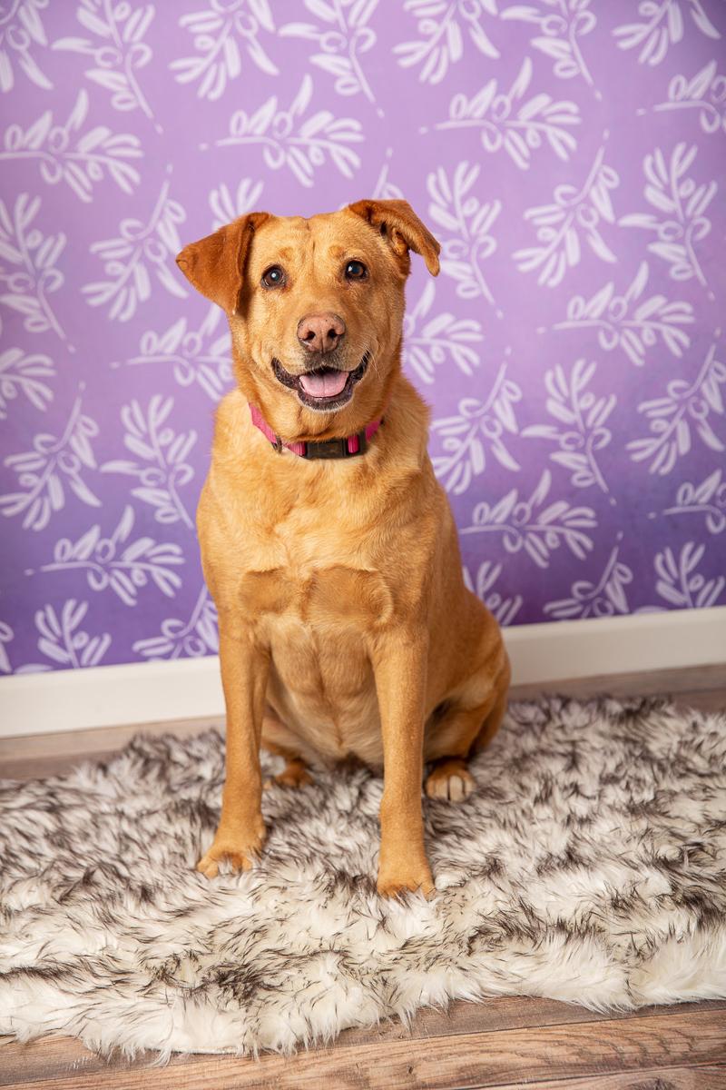 studio pet portraits, ©Tangled Lilac Photography - Flagstaff, Sedona, Greater Phoenix pet photographer
