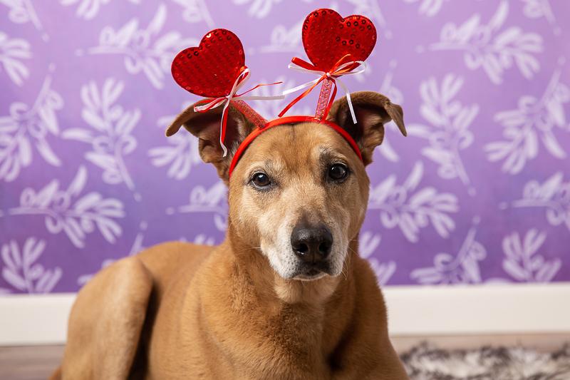 Flagstaff pet photographer, ©Tangled Lilac Photography