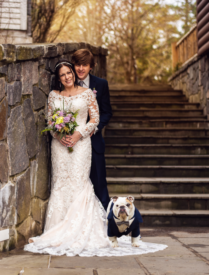Just married couple and their dog, English Bulldog standing on bride's wedding dress, ©Weddings By Ray