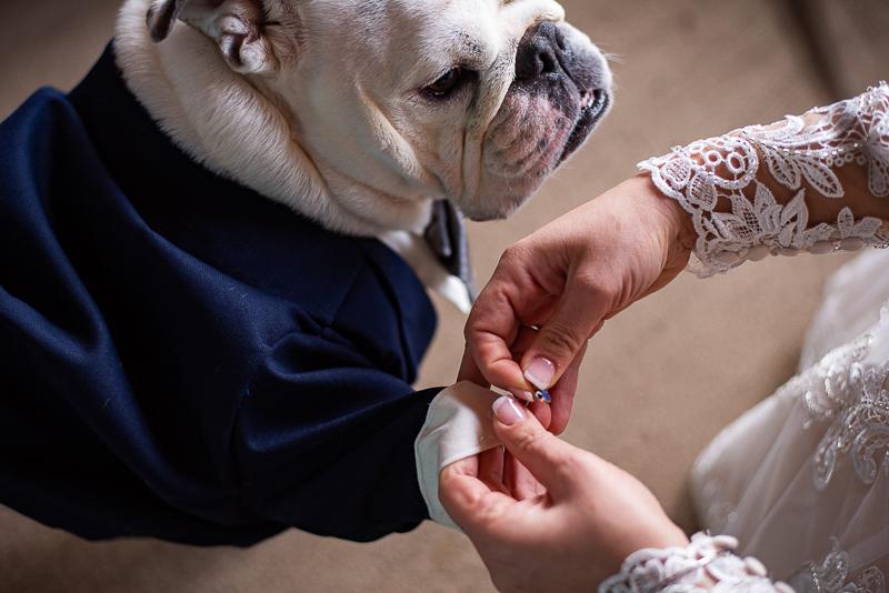 bride putting cufflinks on dog, Best Dog, ©Weddings By Ray Brant Lake wedding photographer