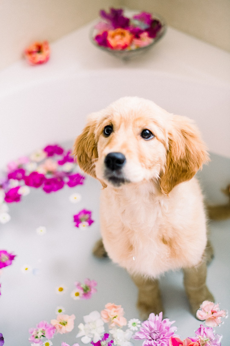 Golden Retriever puppy in floral bath | ©Alyssa Lynne Photography, creative pet photography ideas