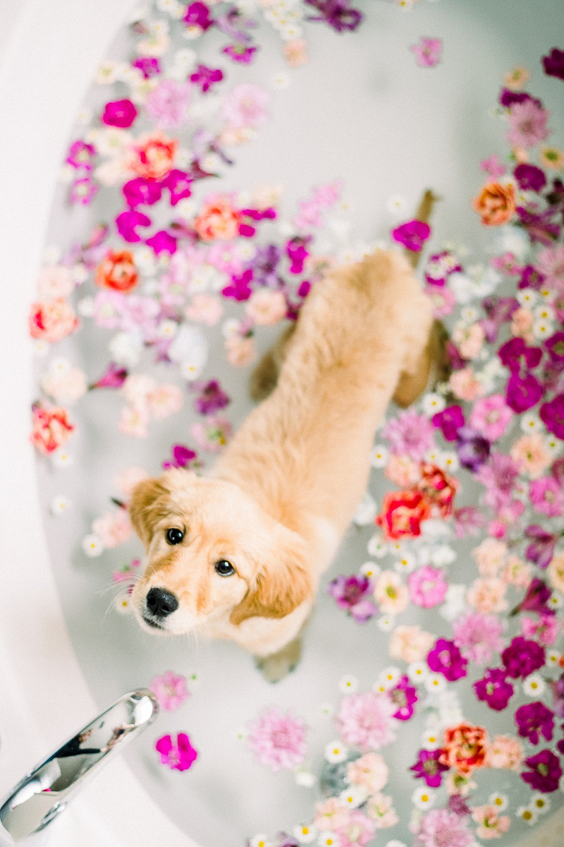 puppy in floral bath, pink, white, magenta flowers ©Alyssa Lynne Photography, Lake Tahoe