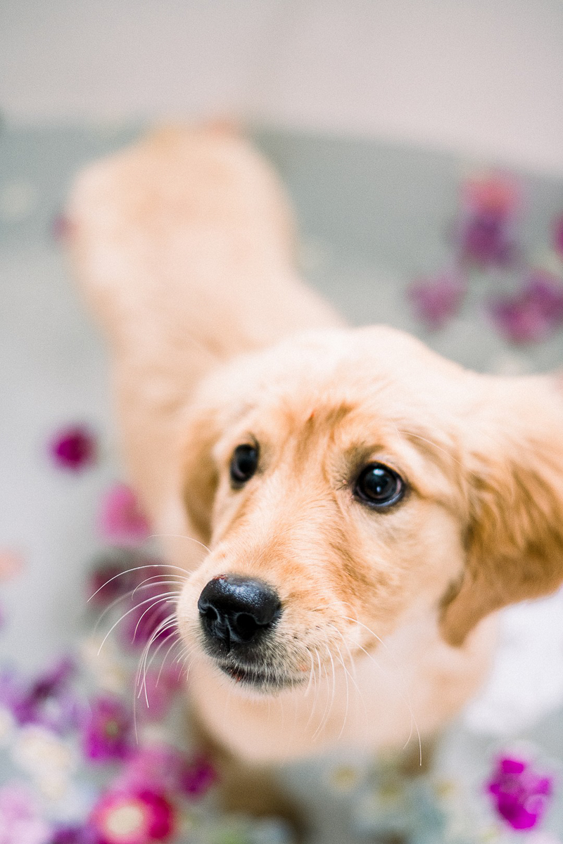 cute puppy in the tub, ©Alyssa Lynne Photography
