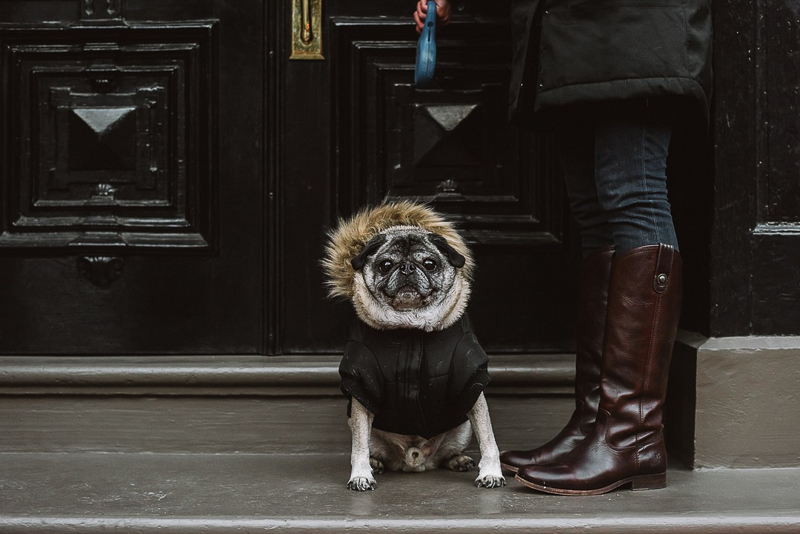 cute senior dog wearing black coat, lifestyle pet photography ©Mei Lin Barral Photography