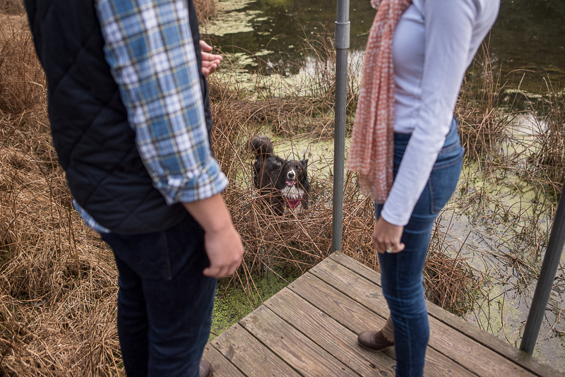 funny engagement photos with a dog | ©Ueda Photography