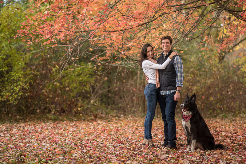 fall engagement photos with a Border Collie, couple and dog under tree with autumn leaves | ©Ueda Photography, Madison, WI