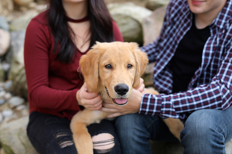 cute pup sitting on couple's laps, ©Abigail Saalfrank Photography,