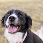 Dog Pawty:  Delilah the Border Collie | Cake Smash