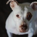 Happy Tails:  Penny the Mixed Breed | Atlanta, GA