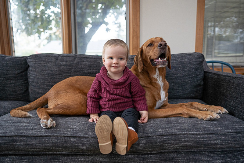 child and dog sitting on sofa, dog-friendly in-home session, Madison, WI