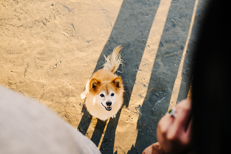 dog-friendly beach engagement session, San Diego | ©mister debs photography