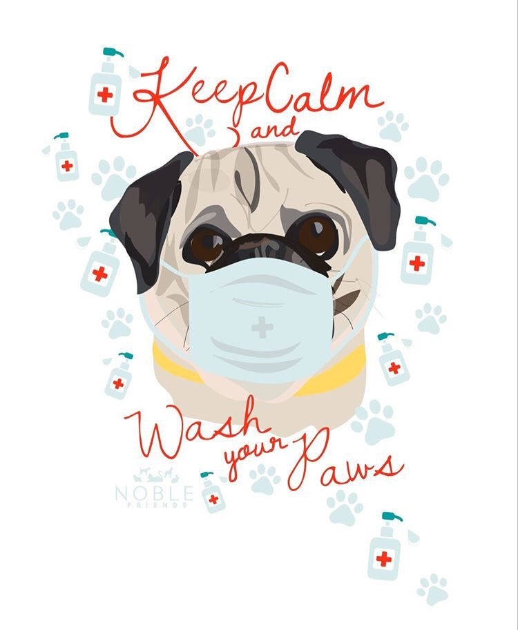 social distancing during COVID 19, Pug portrait Keep Calm and Wash Your Paws