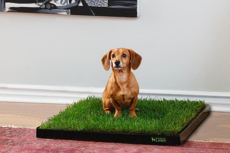sustainable grass subscription for dogs, ideas for helping dogs during COVID social distancing