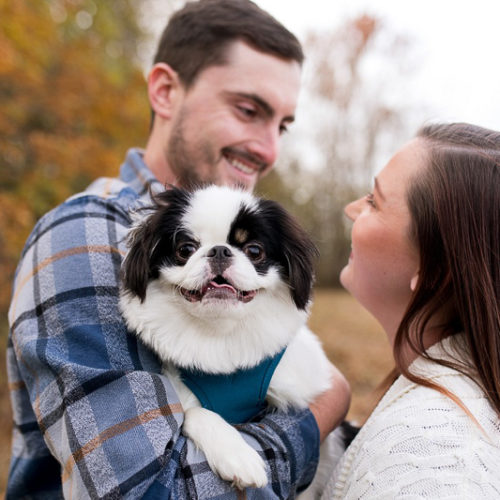 Engaging Tails:  Vinny the Japanese Chin
