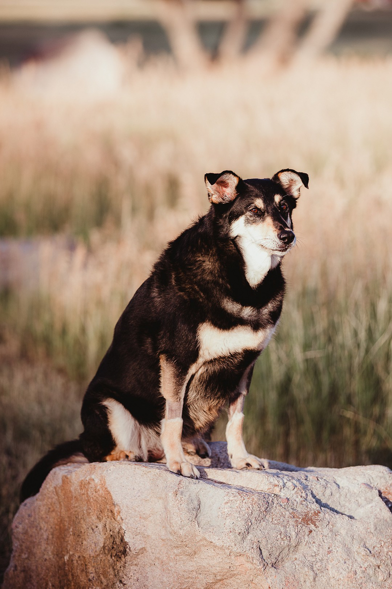 lifestyle dog photography, mixed breed on rock ©Good Morrow Photography | Arvada, CO