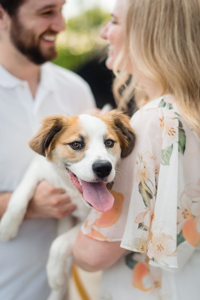 puppy steals show during summer engagement session | ©Jennifer Lourie - engagement photos with a puppy, Naperville, Illinois