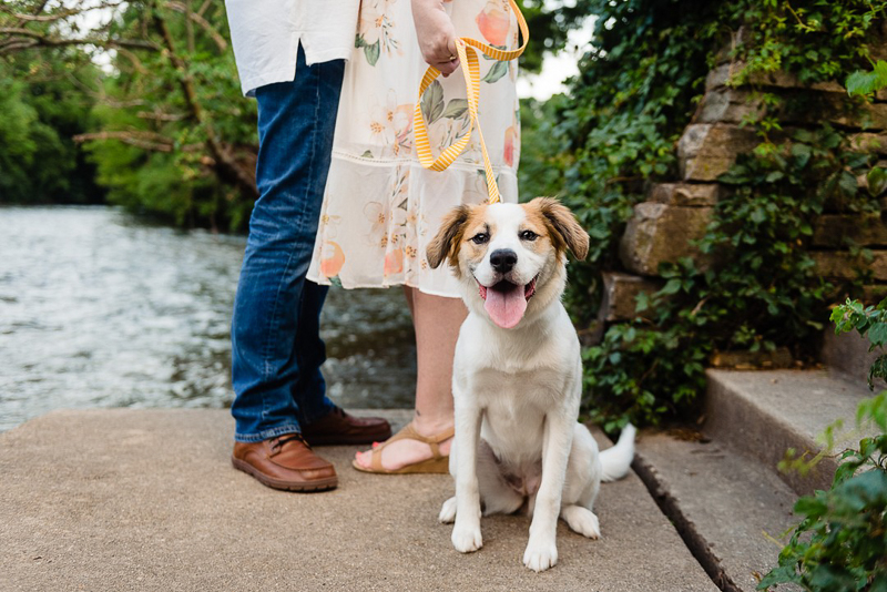 cute mixed breed puppy and humans by river, ©Jennifer Lourie - engagement photos with a puppy, Naperville, Illinois