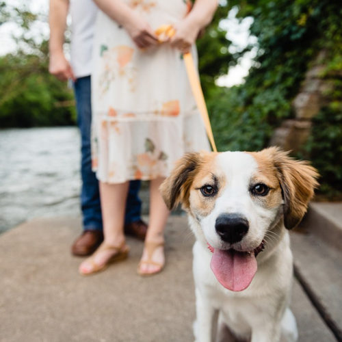 Engaging Tails:  Lucy the Adorable | Naperville, Illinois