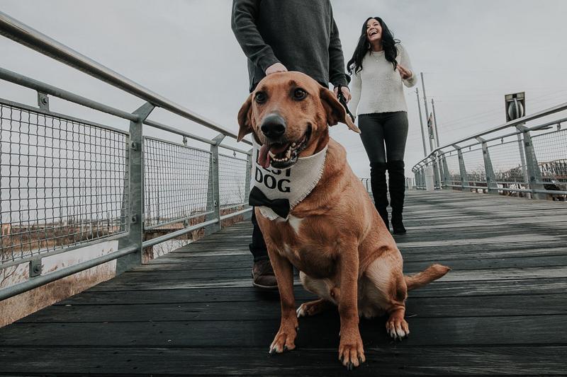 mixed breed on bridge, ©Kelli Wilke Photography | dog-friendly engagement photos, Wilmington Riverfront