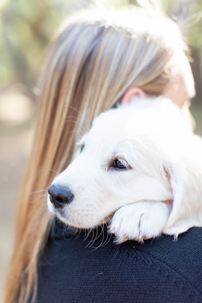 English Cream Golden Retriever puppy snuggling on woman's shoulder |©Laura & Rachel Photography
