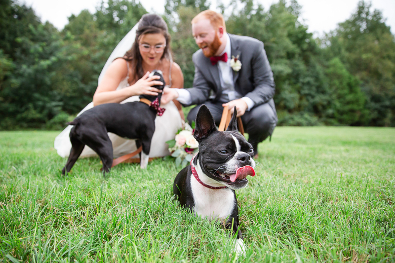newlyweds with their Boston Terriers, including dogs in wedding photos | ©Megan Rei Photography