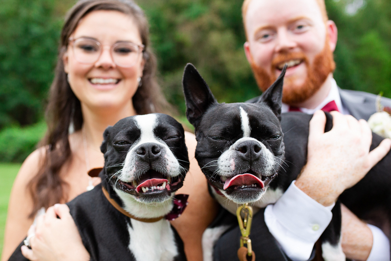 happy Boston Terriers and humans, wedding day photos with dogs | ©Megan Rei Photography, Richmond, VA