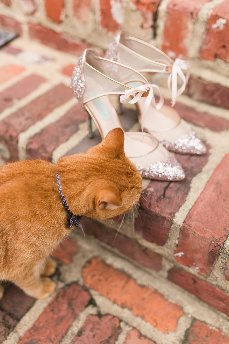 cat checking out shoes for wedding | ©Megan Rei Photography, Northern Virginia wedding photographer