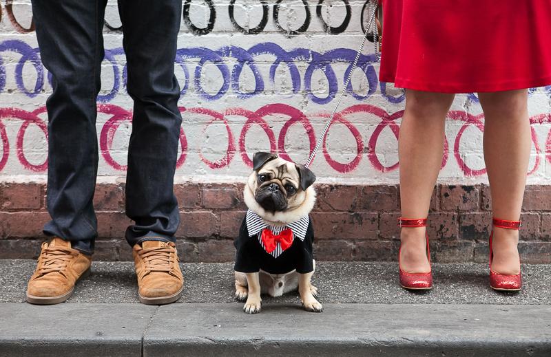 fashion hound, Pug wearing Tuxedo | ©Pupparazzi Pet Photography