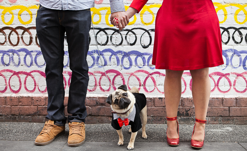 cute Pug head tilt, dog wearing tuxedo for engagement photos | ©Pupparazzi Pet Photography, Melbourne, Victoria