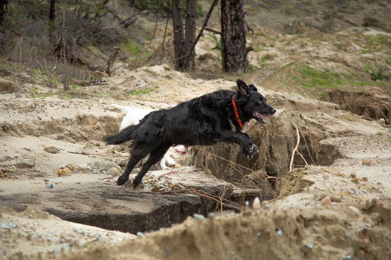 black mixed breed dog jumping a small ravine | ©SLO Town Studios, Santa Cruz, CA